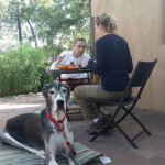 A Great Dane sits next to his owners