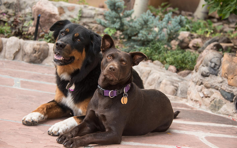 Santa Fe Pet Friendly Lodging - doggy sunbathing.