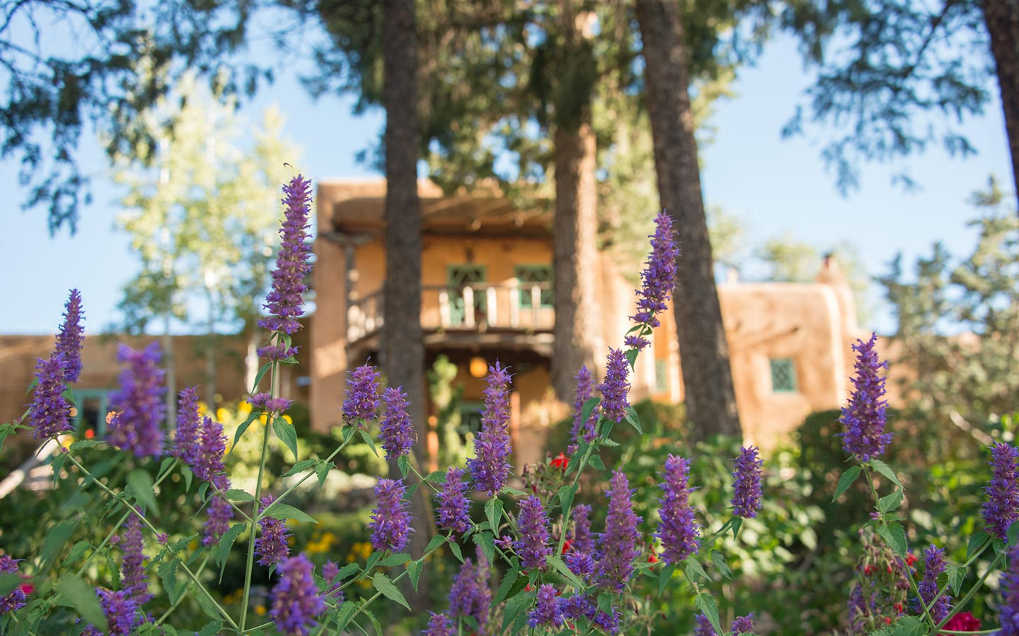 Santa Fe Bed and Breakfast Gardens