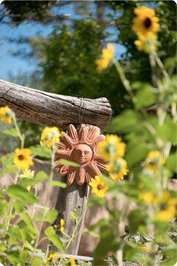 Sunflowers in gardens