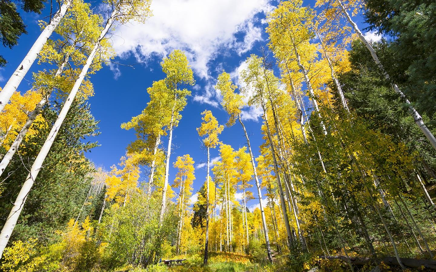 A view of Aspen Forest in New Mexico