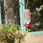 Hummingbird feeds at feeder in garden