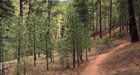View along Santa Fe's Chamisa Hiking Trail